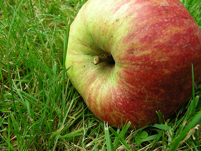 newton_apple_640